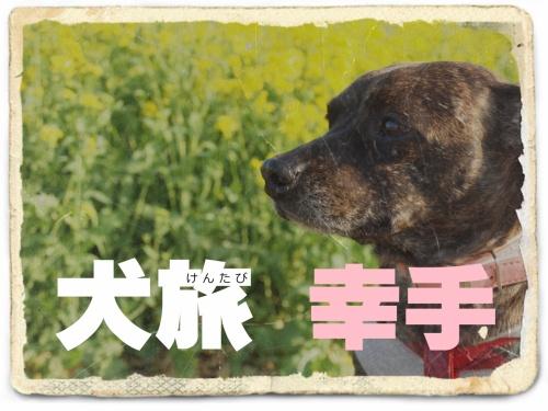 犬旅 ~幸手~