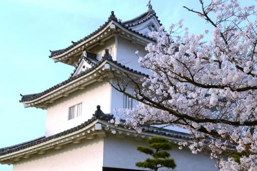 四国のサクラ(香川・丸亀城)