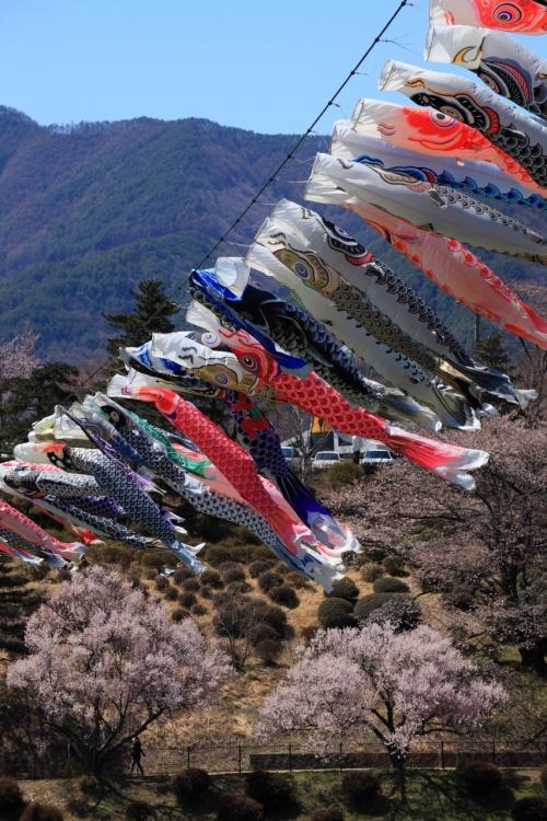 長野 桜めぐり~高遠城跡、六道の堤、春日公園、荒神山公園