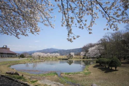 春になったから、お花見にいかないとね…<br />って事で、1泊2日の春を満喫する桜旅のバスツアーに参加。<br /><br />1日目は、川中島合戦で上杉謙信と武田信玄の戦いの舞台となった場所『八幡原史跡公園(川中島古戦場)』と国宝『松本城』の桜を観賞。<br />当日の気温は24℃、暖かくてお花見びよりとなった(´∀`)♪<br /><br />桜を楽しんだ後は早めにホテルへ。<br />宿泊は、美ヶ原温泉にある5つ星の宿『ホテル翔峰』。<br />温泉でゆっくりまったり゚+.゚(*´∀`)b゚+.゚<br /><br />2013年の桜と宿の旅行記、お楽しみくださいませ。<br /><br /><br /><br /><br /><br /><br />