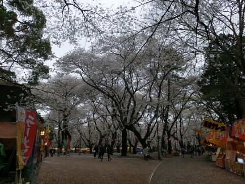 ちょっと寄り道大宮公園でお花見(2013年3月)