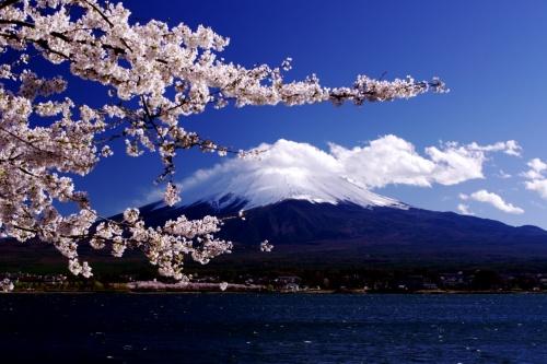 今年は関東の桜運が悪くて<br />お休みの日は天気がわるい...