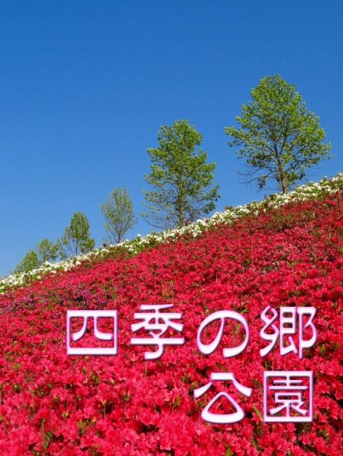 「四季の郷公園」 ツツジ満開の丘