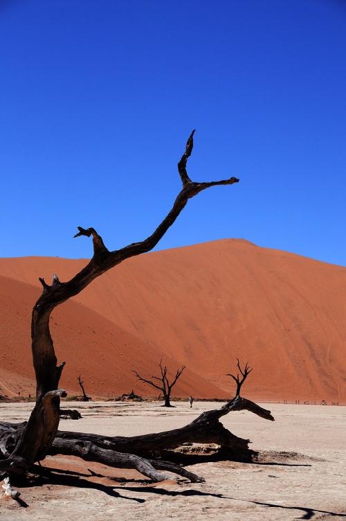 赤い砂漠を見たくて、はるばるナミビアまで行ってきました。<br />ついでにイルカや海砂漠、ちょっと南アフリカまでいってペンギンみたり。<br />とっても快適でソフィストケイトされた旅を楽しめたナミビアの旅。<br />砂漠師匠と一緒に出掛けてきました。<br /><br />香港・南アフリカ経由でナミビアへ。<br />ネットで手配した現地旅行代理店の砂漠ツアーに参加。<br />空港送迎してくれて、専用車でそのまま砂漠へGO!!<br /><br />1~2日目 成田~香港・ヨハネスブルグ~ウィントフック→砂漠ツアー★<br />3日目 ナミブ砂漠 ★<br />4日目 スワコムプントへ移動 砂漠ツアー終了<br />5日目 イルカウォッチング&サンドウィッチハーバー<br />6日目 スワコムプント~ケープタウン飛行機で移動~フランシュフック(レンタカー)<br />7日目 フランシュフック~喜望峰~ボルダーズビーチ~ヨハネスブルグ(レンタカー)<br />8日目 ヨハネスブルグ~ウィントフック(飛行機)<br />9~10日目 ウィントフック~成田<br /><br />