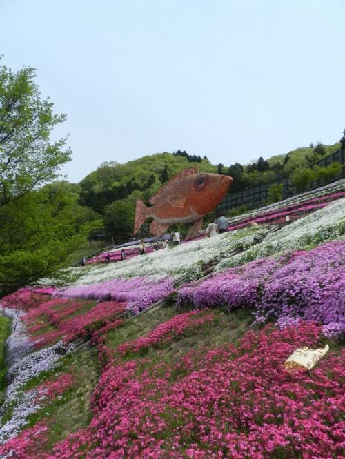 ヤマサ蒲鉾の『芝桜の小径』!?(兵庫県姫路市夢前町)