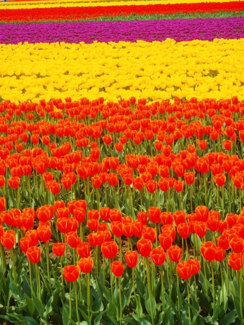 花は咲く GW前半