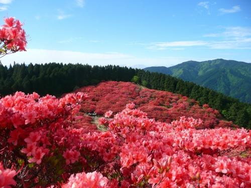 一目千本は、吉野山の桜、一目百万本は・・・