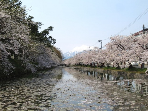 <青森・津軽&西海岸の旅.7>黒石でこけしにハマる? 青森土産&旅の最後は桜・・・
