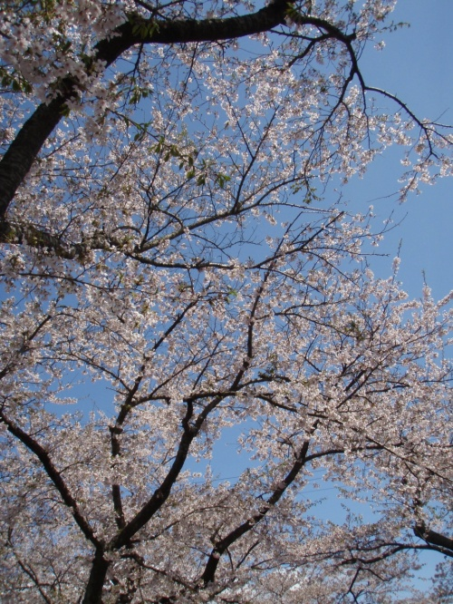 2013GW 東北ドライブ旅行 その1~桜咲く岳温泉から雪の八甲田へ~