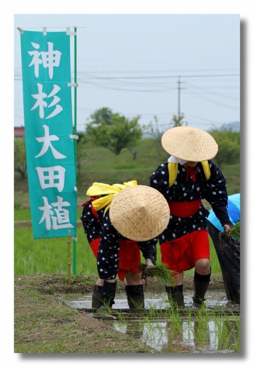 Solitary Journey [1213] テンポのいい田植え歌、大勢の早乙女さんがリズムよく苗を植えていきました。<神杉大田植え>広島県三次市