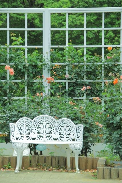 ゆるかわな、薔薇☆生田緑地ばら苑