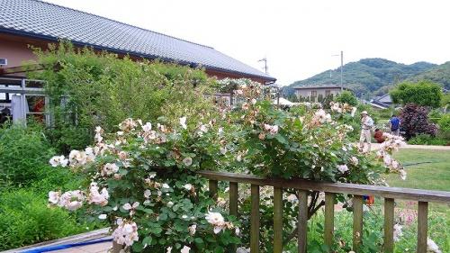 庭園紀行(166)・・・熊山英国庭園は大勢が詰めかけていました。