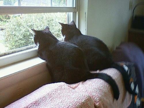 ホームステイしたお宅の猫たちです♪<br /><br />These cats are my friends in DC.<br />I thank them for entertaining me!<br /><br />去年の猫たちは、こちら!<br />The cats' photos in last year is here.<br /><br />http://4travel.jp/traveler/cembalonko/album/10688456/