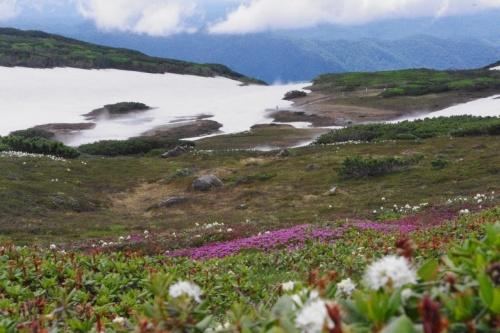 初夏の北海道 スペシャル旅 2日目 山・花巡り スタートは大雪山旭岳