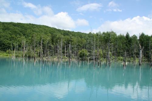 涼を求めて北海道② 青い池、しらひげの滝、白金不動の滝、ぜるぶの丘