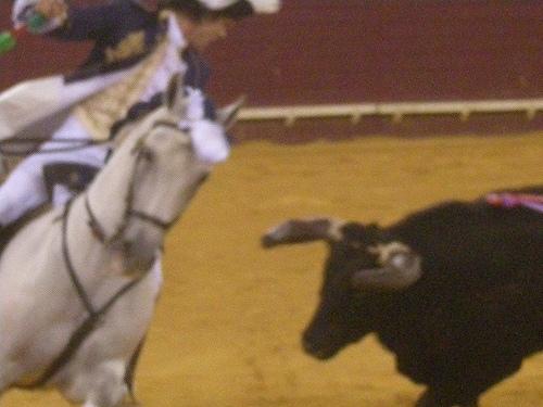 ポルトガルで闘牛を見ようと思ったのは、「ポルトガルの闘牛は牛を殺さないん... ポルトガルで闘牛