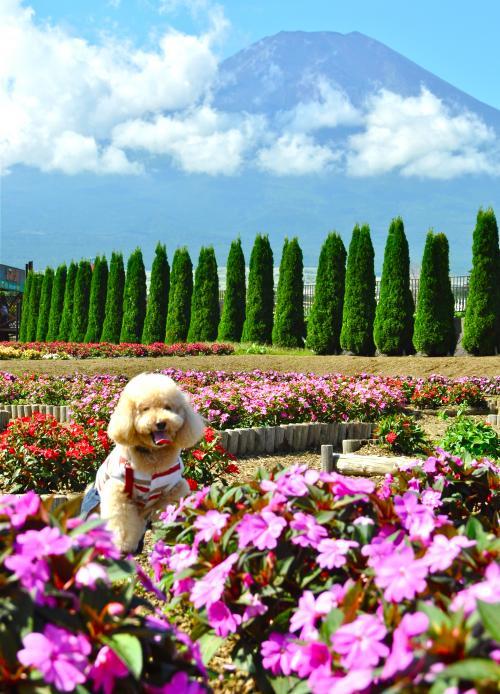 しょーきちさん 富士箱根をいく  富士山・美術館を愛でる旅に大満足