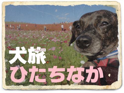 犬旅 ~ひたちなか~