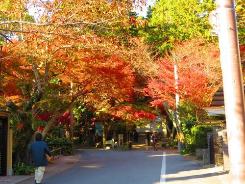 毘沙門堂と紅葉
