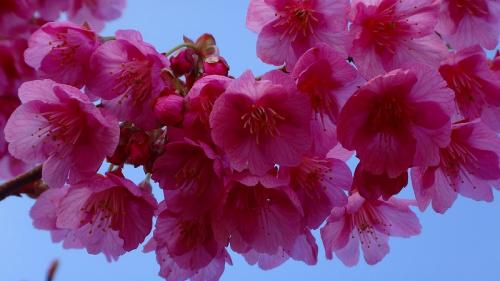 土肥温泉 松原公園で花見