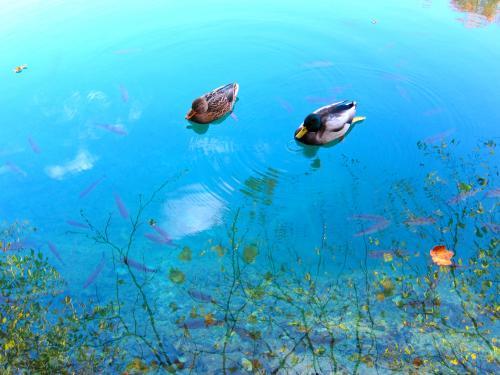 プリトヴィツェ湖群国立公園の画像 p1_26