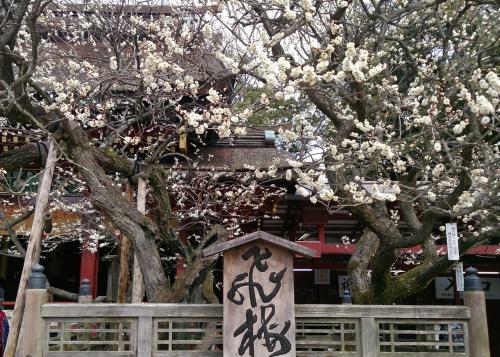 2014年2月 福岡旅行2日目①♪太宰府の梅で一足先に春気分♪