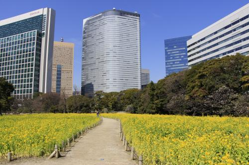 菜の花の香りと梅の花 【浜離宮恩賜庭園 2014年3月】