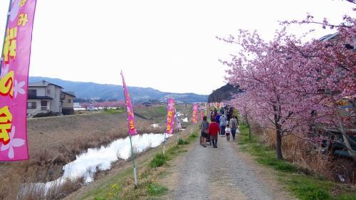 函南町制50周年 桜まつり10周年 お花見。