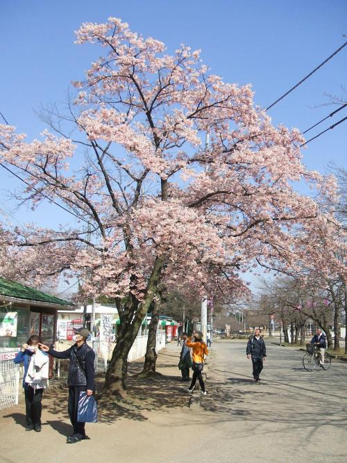 醤油の町・野田市と清水公園の花を巡る