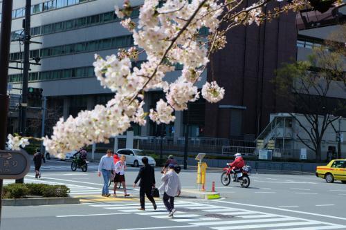 日比谷公園に桜もさいて 2014