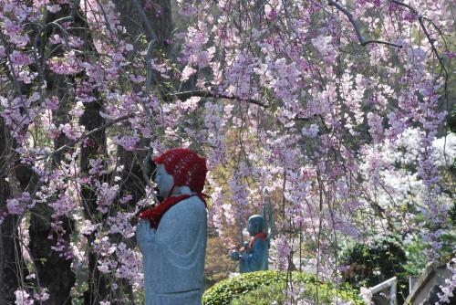 織物で栄えた桐生の近代化遺産と桜を訪ねて