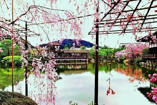 平安神宮の花見