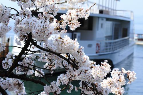 桜を見に 琵琶湖(海津大崎~竹生島~奥琵琶湖パークウエイ)へドライブ!