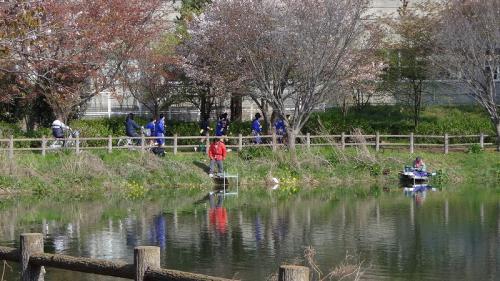 桜追っかけ一人旅(86) 下妻市 砂沼広域公園散策