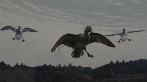 桜追っかけ一人旅(95) 我孫子市 鳥の博物館 上巻