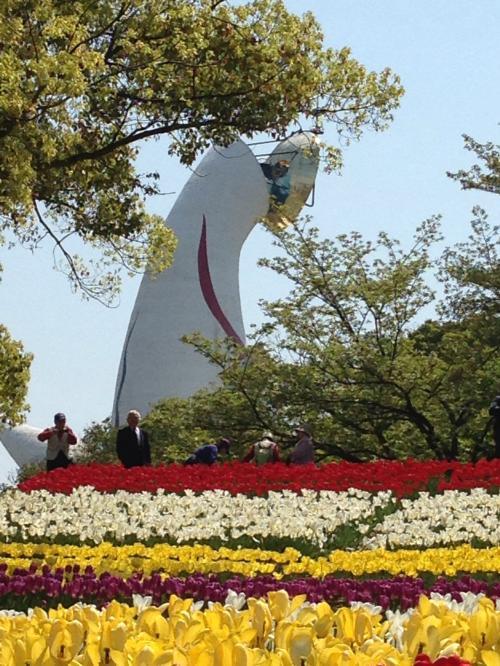 花が満開☆春の万博/ポピー・チューリップ・芝桜/2014年4月