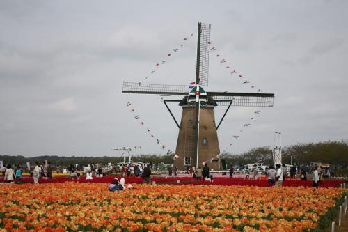 2014年2人合わせて120歳「オランダの香りに誘われて・・・」行ってきました佐倉チューリップ祭り