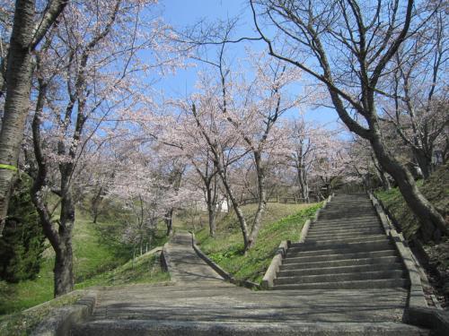秋田の桜はどうかな? 母を訪ねて春の旅 その2 ~八郎潟東部隣接地域の桜~