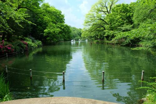 大正 昭和の時代から庶民の行楽地 井の頭公園の春 下