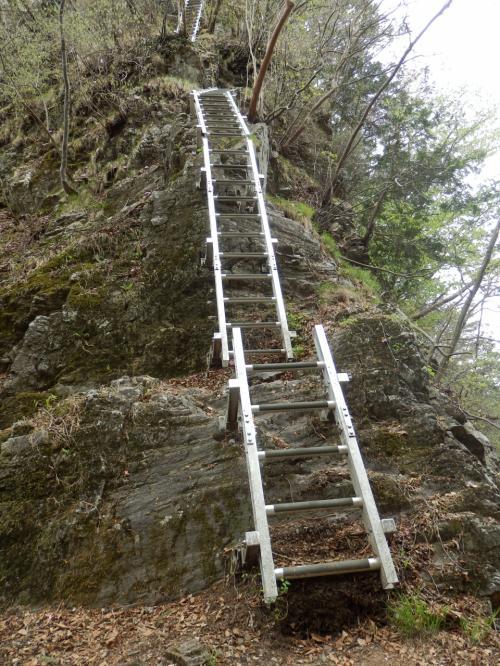 スリル満点 倒木の石裂山(おざくさん) 初めてみたヤシオツツジに感激~♪