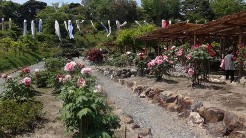 浜名湖花博2014(22)・・・可睡斎の参拝と昼食② ぼたん苑の風景