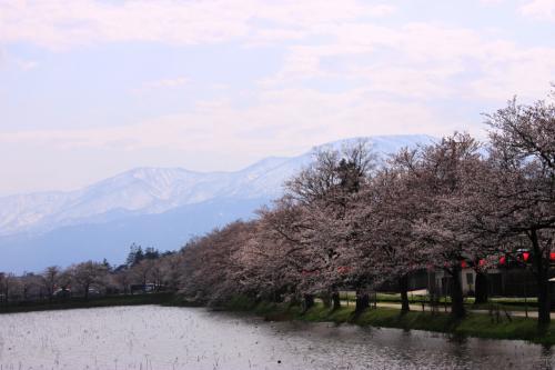 青春18切符一人旅 開府400年高田の城下町巡り 雁木~町家~高田公園の花見でほっこり♪