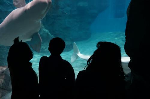 お出かけ 9年ぶりの名古屋港水族館