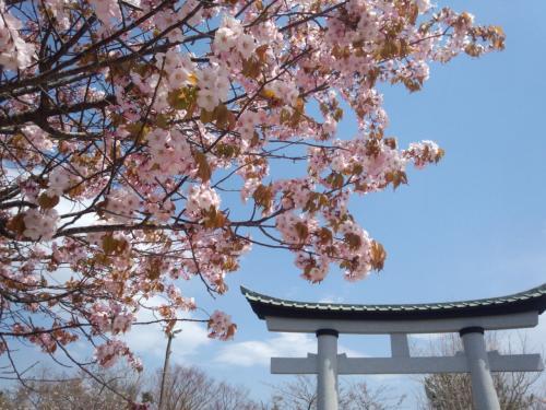 GW最終日に桜を求めて