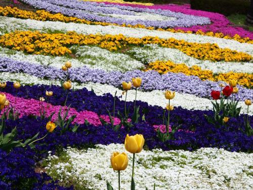 GWのうちに・・・若葉が溢れ、チューリップも芝桜もとっくに見頃になっていたけれど・・・まだギリギリ間に合ったかな~(*^_^*) =みちのく杜の湖畔公園=