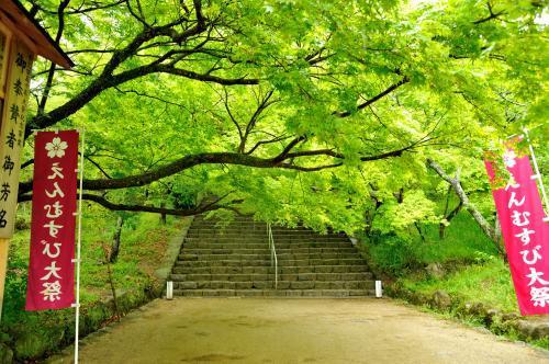 """生命の息吹輝く新緑の季節<br />宮地嶽神社に続いて、太宰府天満宮・竈門神社・光明禅寺を訪れました。<br /><br />竈門神社は、人気の縁結びの神社のようですね。参拝客が多くてビックリ!<br /><br />そして御守り授与所がなんとも斬新な・・展望テラスも有って <br /> オォォ♪((*゚゚∀゚゚*))<br /><br />表参道・原宿辺りのブッテクみたい  ワァ(・∀・)オ。・:゚*<br /><br />太宰府からは車でしか行けない所のようですが、<br />バスを利用して行きました。そんなに不便は感じませんでした。<br /><br />""""光明禅寺""""  のお庭は新緑の色に何もかもが染まり、それは見事でした。<br /><br />シャクナゲの咲くこの時に訪れる事が出来 (*'▽`人)゚.:。+゚<br /><br />また一軒 通いたくなるお店と出会いました。<br />太宰府に有るフレンチのお店 その仕事の丁寧さに(*'▽`人)゚.:。+゚<br /><br />充実感あふれる 一日でした。<br /><br /><br /><br /><br />"""