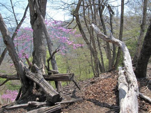 新緑の美しい日原からタワ尾根を登る
