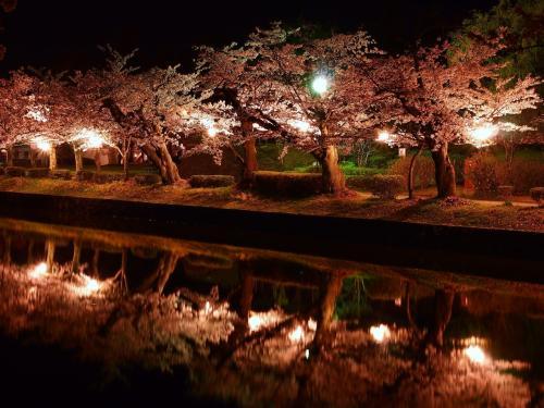 花も団子も・・・!欲張っちゃった~~(*^_^*)!!**山形県・鶴岡市**②**庄内藩校致道館、鶴岡公園、アル・ケッチァーノ、鶴岡公園の夜桜など**