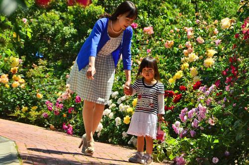 県内最大の切りバラ産地「バラ祭りinごうど」