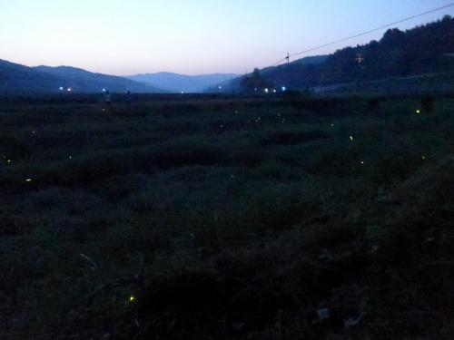 仏の里・国東へ癒しの蛍を観に行きました